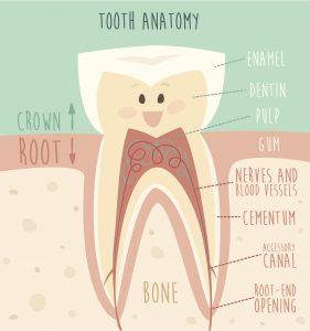 Contrary to popular myth, root canals aren't painful – they actually treat the tooth pain you're feeling. Your dentist in Zoinsville explains how in this post.